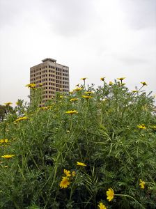 Urban vacant land with weeds